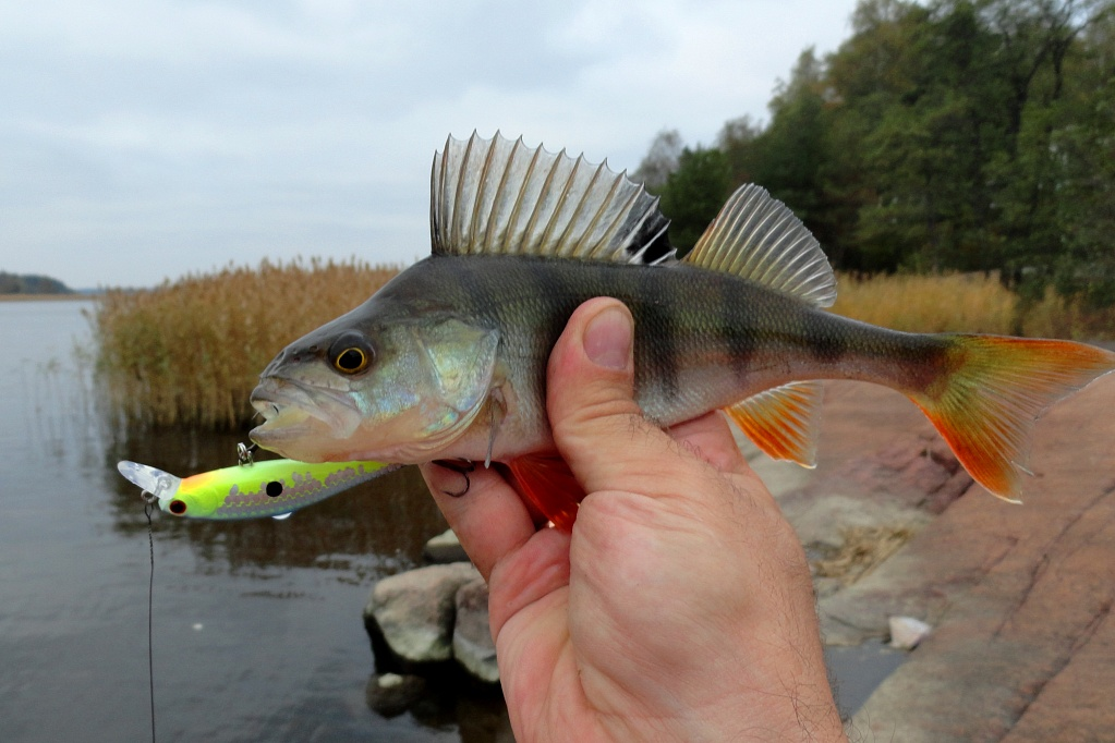 "Perch Killer <br> Автор: <a class=""ar2"" href=""/lcteam/member.php?ID=8302"">Алексей Никитин</a>"