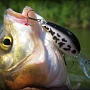 Lucky Craft Clutch DR White Bass